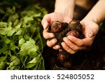 natural vegetable fresh... | Shutterstock . vector #524805052
