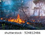 Forest Fire. Fallen Tree Is...