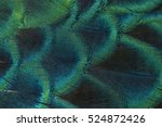 close up peacock feathers | Shutterstock . vector #524872426