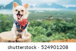 Stock photo adorable chihuahua puppy sitting with view point thailand 524901208