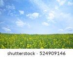 rapeseed field | Shutterstock . vector #524909146