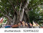 Small photo of Banyan and faith.Apostasy is often dependent on the sanctuary.The tree is believed to have supernatural healing.