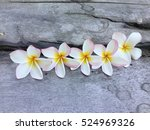pink almeria | Shutterstock . vector #524969326