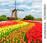 traditional netherlands holland ... | Shutterstock . vector #525045865