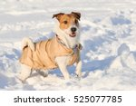 Playful Dog Wearing Warm Coat...