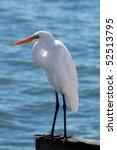 White Heron Fishing On The...