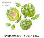 set artichokes watercolor ... | Shutterstock . vector #525141562