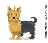 yorkshire terrier dog at one... | Shutterstock .eps vector #525143782