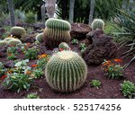 Golden Barrel Cactus Arranged...
