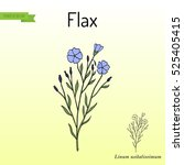 flax plant with flowers. hand... | Shutterstock .eps vector #525405415