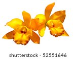 Yellow Orchid In White Isolate...