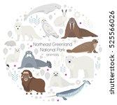 polar animals. vector circle... | Shutterstock .eps vector #525566026