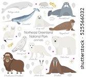 greenland national park animal... | Shutterstock .eps vector #525566032
