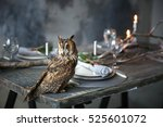 Owl Sits On A Beautiful...
