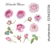 flowers set of hand drawn... | Shutterstock . vector #525632536