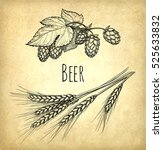 hops and malt on old paper... | Shutterstock .eps vector #525633832