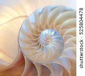 Small photo of shell nautilus Fibonacci section spiral pearl symmetry half cross golden ratio structure growth close up back lit ( pompilius nautilus ) - stock photo photograph image, picture