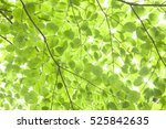 fresh green | Shutterstock . vector #525842635
