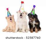 Humorous Puppies Singing Happy...