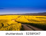 Way in rapeseed field - stock photo