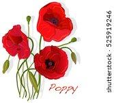 Stock vector red poppy flower isolated on white background vector illustration 525919246