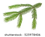 fir tree branch isolated on a... | Shutterstock . vector #525978406