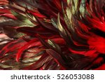 rooster feathers. carnival.   Shutterstock . vector #526053088
