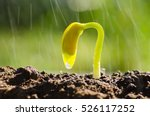 seedling agriculture and new... | Shutterstock . vector #526117252