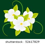 bouquet of three white flowers. ... | Shutterstock .eps vector #52617829