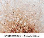 Dried Flower Vintage Wallpaper...