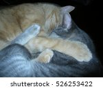 Small photo of Sampson and Nala cuddling.