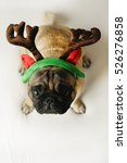 Stock photo pug dog sitting in funny christmas costume 526276858
