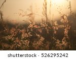 grass and senset | Shutterstock . vector #526295242