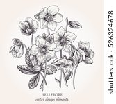 Collection Of Hellebore Flower...