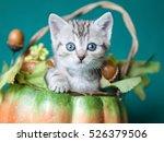Stock photo small grey striped kitten sitting in a pumpkin basket 526379506