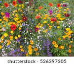 Wild Flower Mix With Poppies...