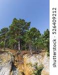 Pine Tree On The Steep Bank Of...