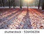 Beautiful Frosty Snow Leaf...