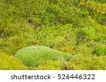 A Green Moss Textured Background