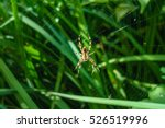 close up of spider in web | Shutterstock . vector #526519996
