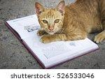 Stock photo cat kitten cute pet lovely animal concept 526533046