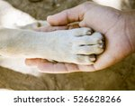 Stock photo dog paw and human hand 526628266
