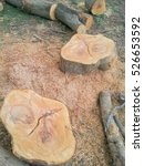 Small photo of Logger of wood