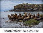sea lions | Shutterstock . vector #526698742