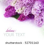 Spring Lilac Border.isolated O...