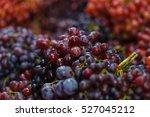 Grapes  Fruits.