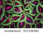 green leaf background.   Shutterstock . vector #527136982