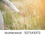 closeup picture of a beautiful... | Shutterstock . vector #527143372