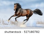 Bay Horse Run Gallop In Winter...