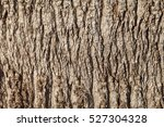 Texture Of Palm Tree Bark....